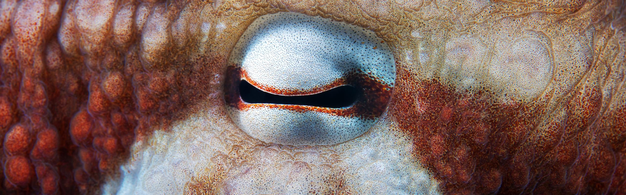 Cephalopoda cover