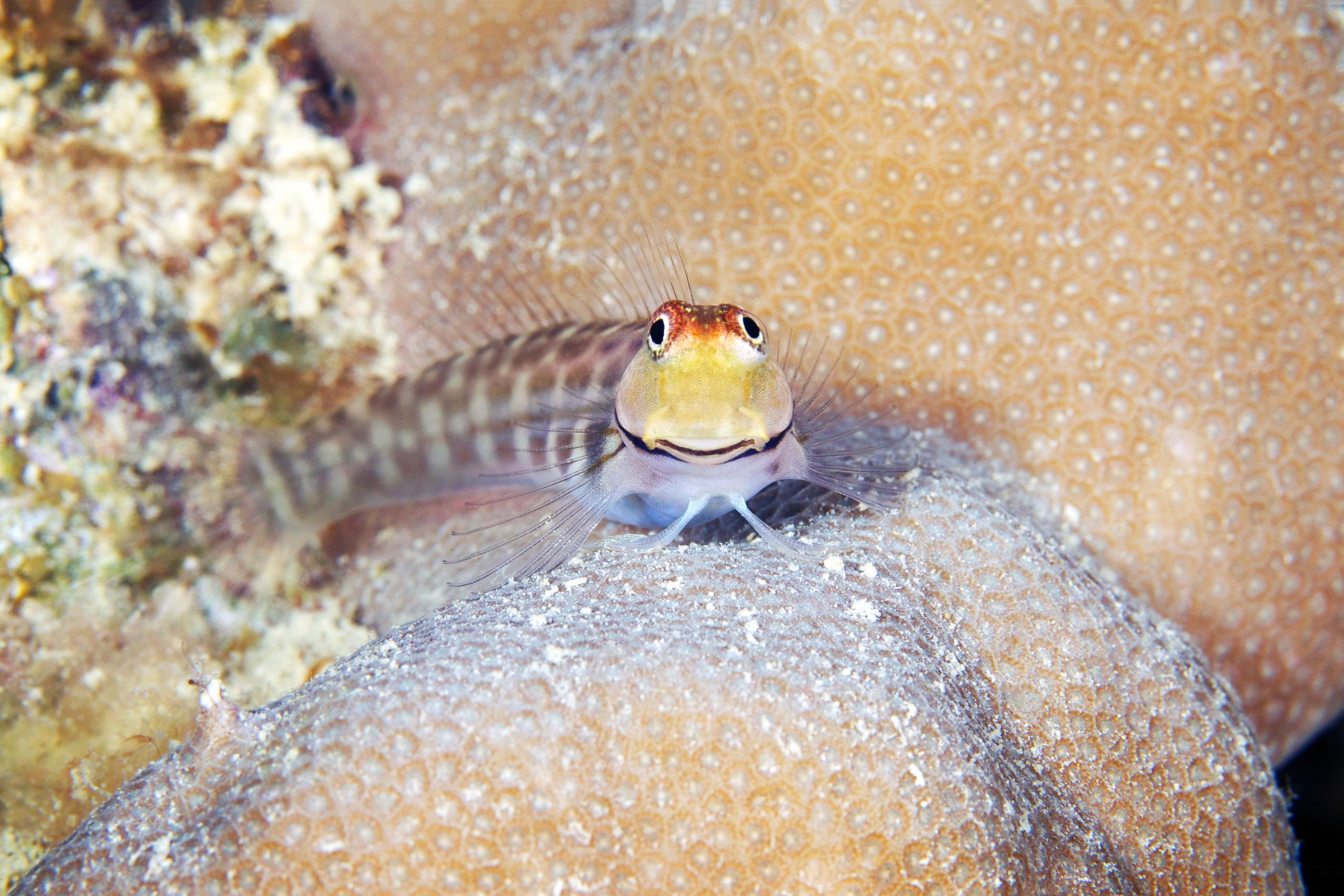 Fish – Smiling fish